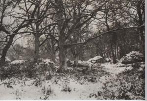 Photographie (avant 1879) représentant la Forêt de Fontainebleau