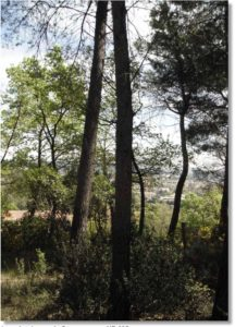 Le point de vue de Cézanne pour R695