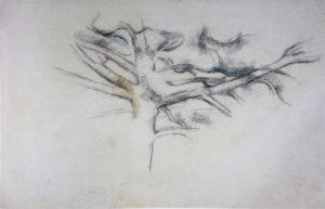 RW285 Étude d'arbre (Le grand Pin) 1885-1890