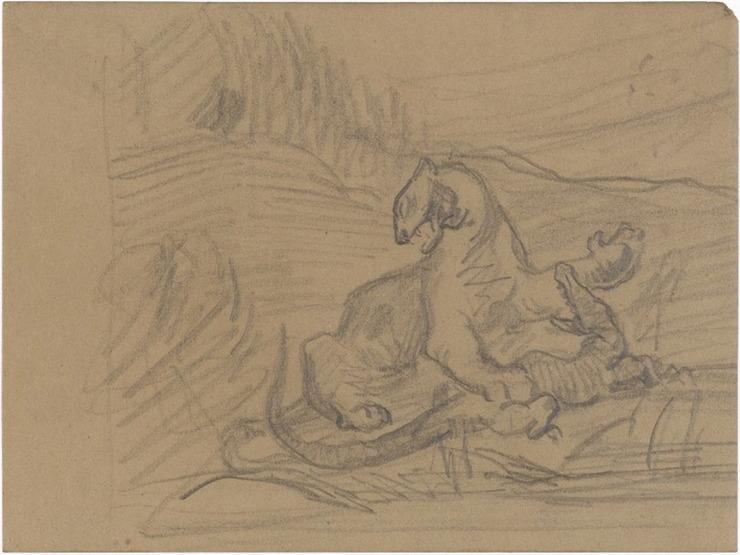 05R C0142 Fauve et crocodile 66-69